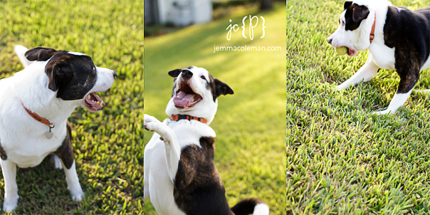 Jupiter, FL Pet Photographer