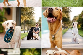 South Florida Pet Photographer