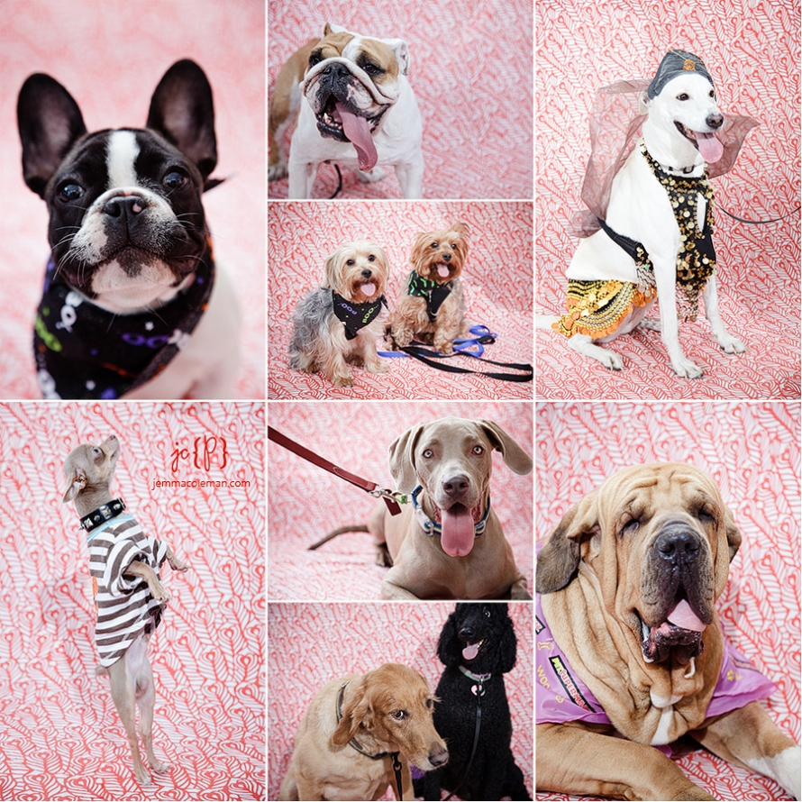 Palm Beach Treasure Coast Pet Photographer